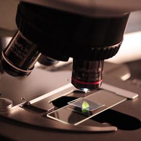 Basic Microscope Setup and Use