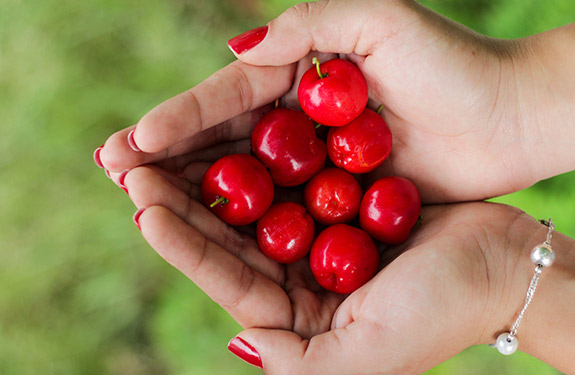 Student holding picked cherries