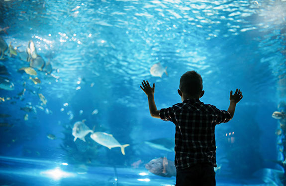 Vancouver Aquarium at Stanley Park