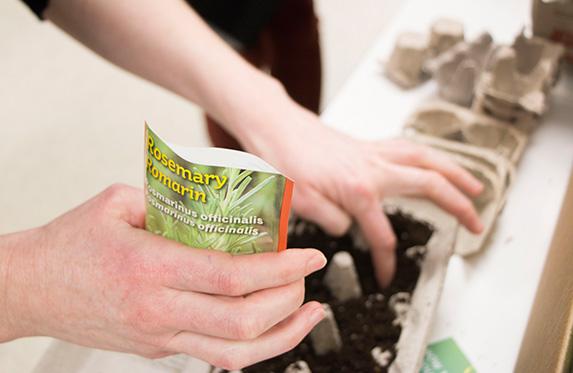 Green Committee doing an indoor gardening